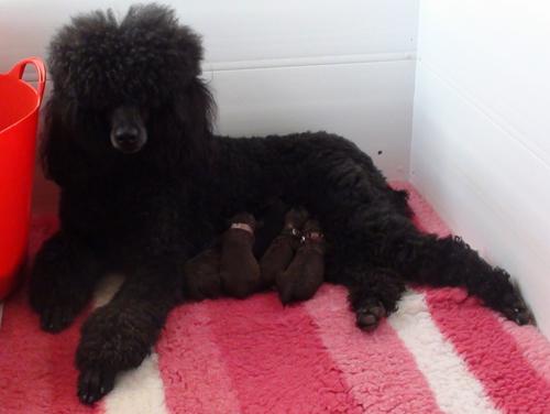 Adhara's puppies