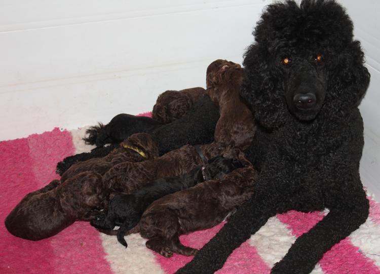 Saffi with pups