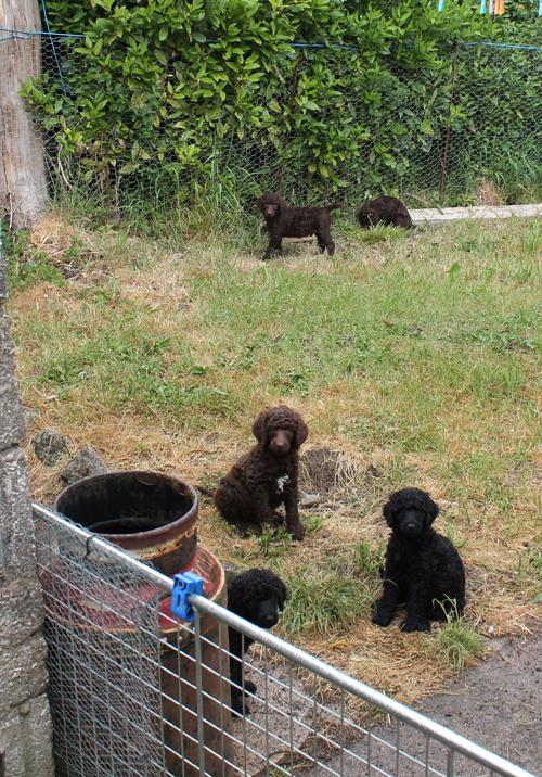 wet puppies
