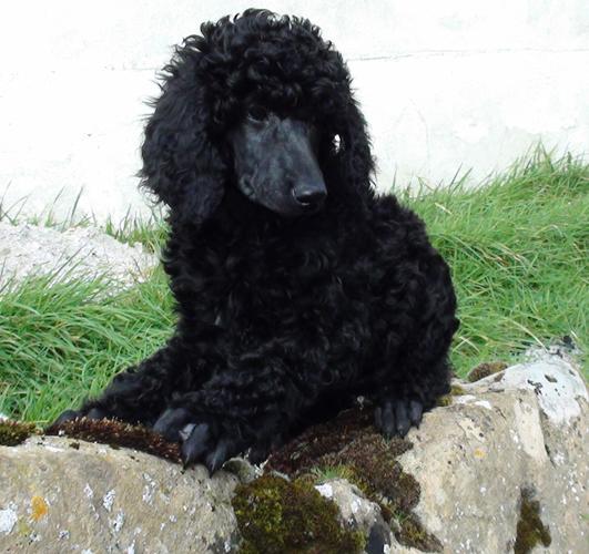 Rock puppy